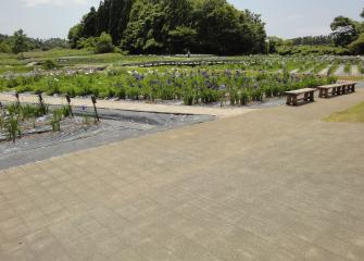 小泉潟公園菖蒲園(遊歩道)